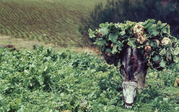 Exposición: LA VIDA LENTA. Memorias y ritmos del rural gallego. VIGO
