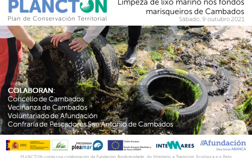 PLANCTON: Limpieza de los fondos marisqueros en Cambados